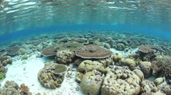 Coral Reef Growing in Shallows Stock Footage