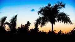 Palm trees on the background of a beautiful sunset, Punta Cana Stock Footage