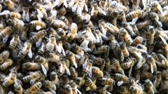 Swarm of bees (close-up) Stock Footage