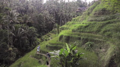 Group of tourists walking through the stairs rice terrace in Tegallalang, Ubud  Stock Footage