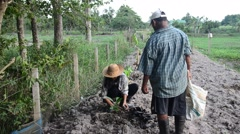 Old man and daughter together help planting tree and growing vegetable at garde Stock Footage
