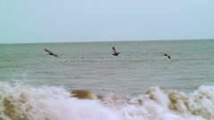 trio of Brown Pelicans fly over waves dolphin at end - stock footage