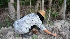 Thai woman planting tree and growing vegetable drop in hole at garden - stock footage