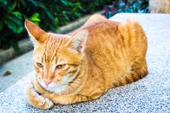 The cute orange street Cat Stock Photos