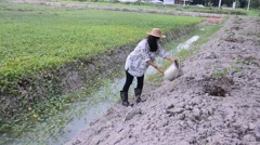 Thai woman use bucket of water watering tree at garden Stock Footage