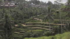 Group of tourists walking down the stairs in rice terrace in Tegallalang, Ubud  Stock Footage