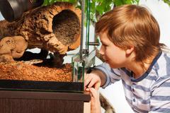 Boy watching Royal python at the terrarium Stock Photos