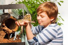Young boy admiring beautiful Royal python Stock Photos