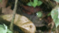 Time-lapse of a spiny spider Micrathena sp. making its web Stock Footage