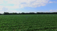 Fields irrigation system in summer Stock Footage