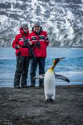 Man and woman watching king penguin stretching - stock photo