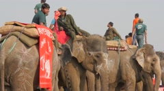 Elephants with rider at festival,Chitwan,Nepal Stock Footage