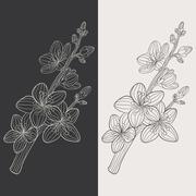 Cherry blossom flower vector Piirros