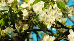 Green blooming flowers branch with a bee Stock Footage