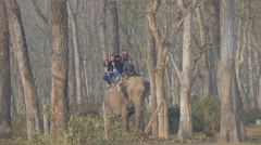 Elephant with tourists walk through forest,Chitwan,Nepal - stock footage
