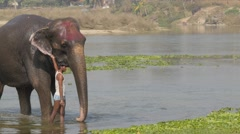 Man finsihed washing elephant,Chitwan,Nepal - stock footage