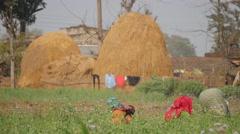 Women working in field with haystack,Chitwan,Nepal - stock footage