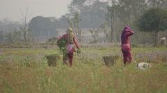 Women working in field,Chitwan,Nepal - stock footage