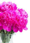 Bright pink peony flowers - stock photo