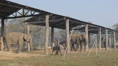 Elephant breeding farm with babys,Chitwan,Nepal - stock footage