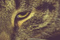 Macro of Tabby Cat Eye Stock Photos