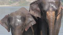 Elephant washing in river,Chitwan,Nepal - stock footage