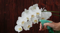 Woman hands with sprayer spraying on orchid flowers - stock footage