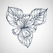 iris vector hand drawn - stock illustration