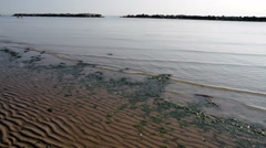 Beach with algae and low tide - stock footage