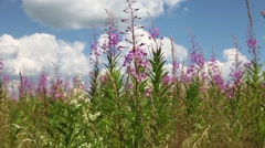 Beautiful Sunny Day in the flower field Stock Footage