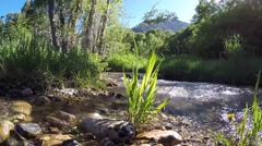 Serene creek in the Wasatch mountain range at Snowbasin, UT. Stock Footage
