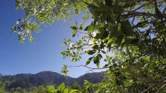 Spring in the Wasatch mountains in Utah Stock Footage