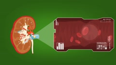 Kidney - Blood Stream - Vector Animation - Blood Circulation - Zoom Analysis  Stock Footage