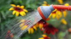 Watering, watering the garden and the garden, botany Stock Footage