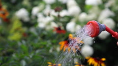watering, watering the garden and the garden, botany - stock footage
