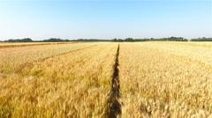 Wheat field grains flat landscape aerial shot 4K Stock Footage
