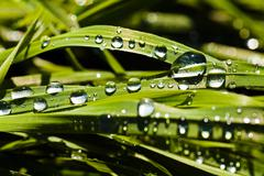 Dew drops on the grass - stock photo