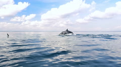 Tranquil and serene slow motion video of wild dolphins jump from water in sea - stock footage