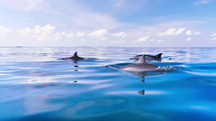 Relaxing slow motion video of dolphins swim in blue sea water close to camera - stock footage