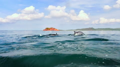 Group of dolphins swim together near sea coast. Beautiful nature slow motion Stock Footage