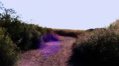 Flower Path color enhanced Stock Footage