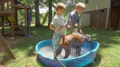 Boys Washing Boxer Dog In Backyard Pool Stock Footage