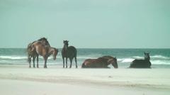 Wild mare kicks stallion repeatedly Stock Footage