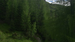 AERIAL: Flying up and over the green larch trees towards rocky mountain tops Stock Footage