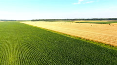 Flying over corn field and harvested wheat field 4K Stock Footage