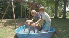 Children Washing Boxer Dog In Backyard Swimming Pool Stock Footage