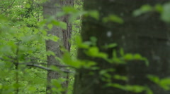 SLOW MOTION CLOSE UP: Young green trees in lush dense forest in springtime Stock Footage