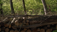 SLOW MOTION CLOSE UP: Stacked cut raw timber wood logs in young lush forest Stock Footage