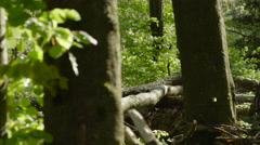 SLOW MOTION CLOSE UP: Fallen tree trunks in forest after natural disaster Stock Footage