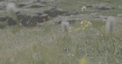 Mountain wildflowers Stock Footage
